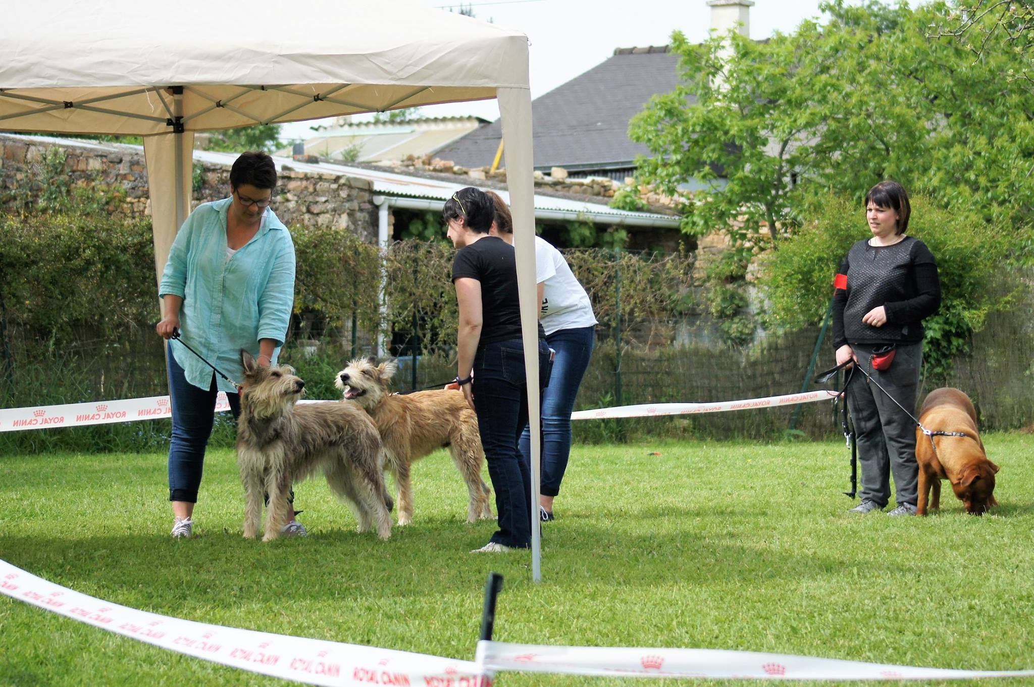 handling, picard , berger , dogue de bordeau , dressage chien 35