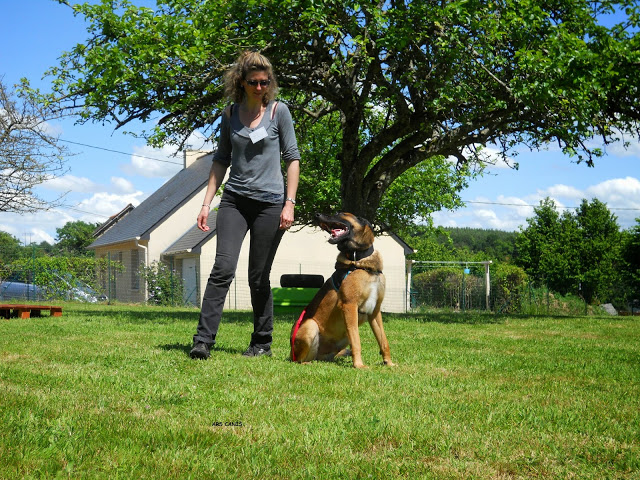 malinois education 35