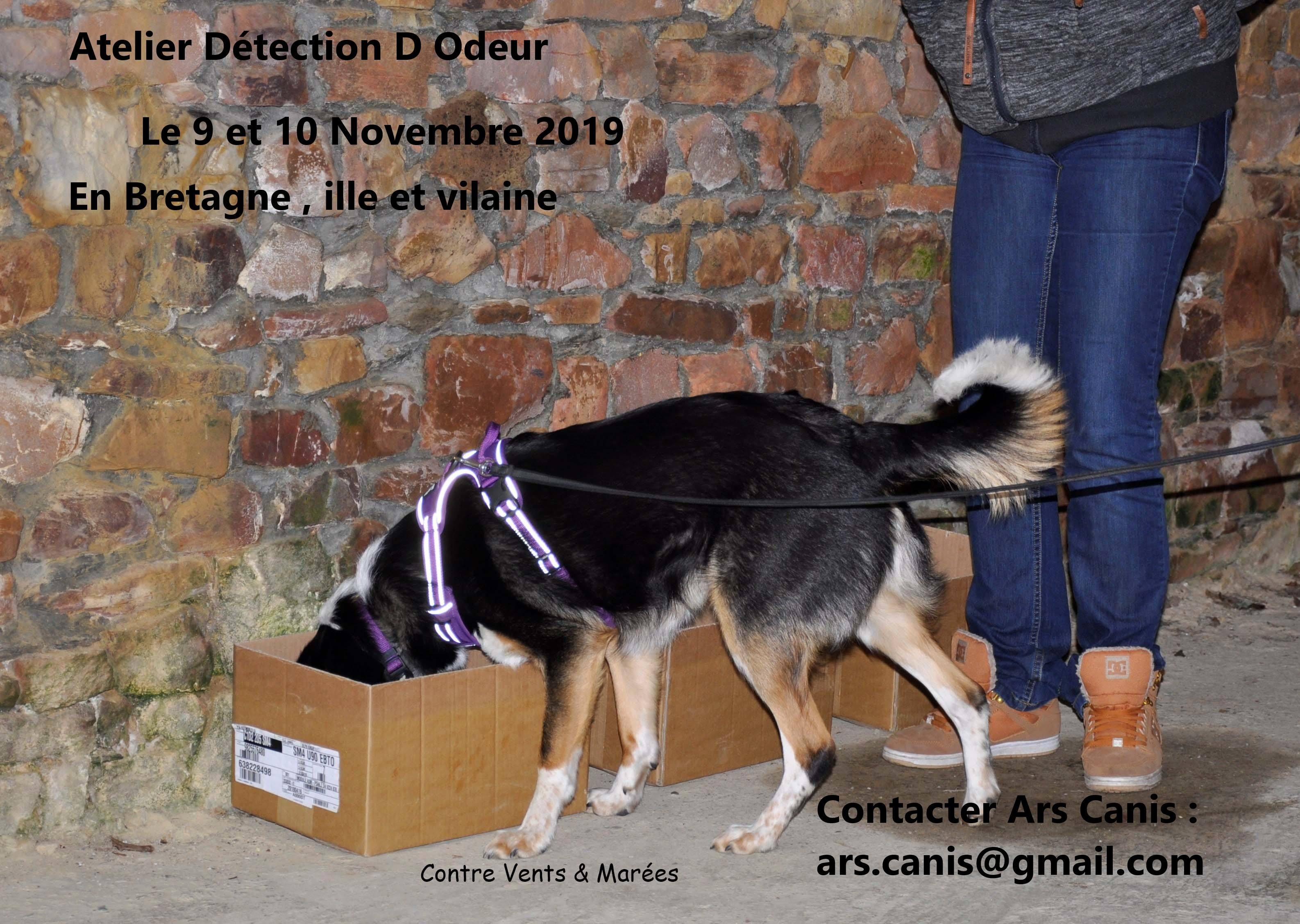 atelier detection Ars Canis